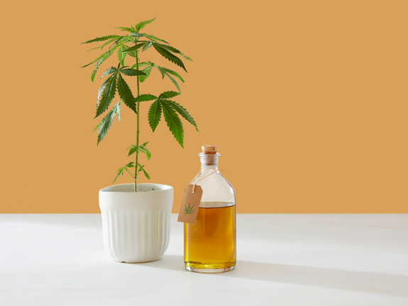 Cbd Oil Offer For Sale